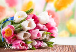 Tulipány_log